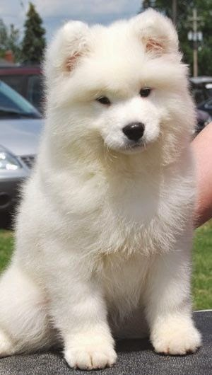 Top 5 most cutest Dogs