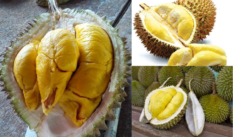 trái sầu riêng ngon