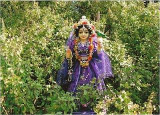 tulsi mata, hindu gods, hinduism, jai tulsi mata,Basil, tulsi leaves, tulsi ma, tulsi aarti