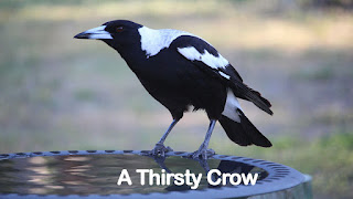 A Thirsty Crow