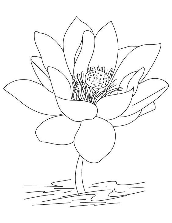 Tranh tô màu hoa sen 9