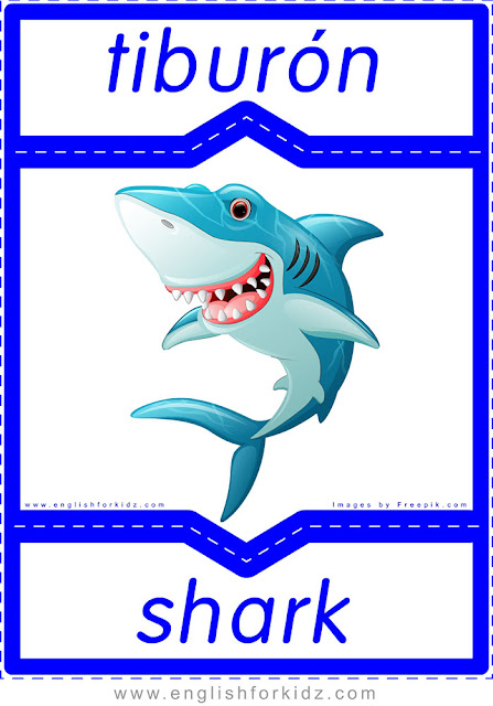 Shark in Spanish, English Spanish flashcard