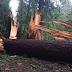 ΕΝ ΕΤΕΙ 2018!!!ΜΥΣΤΗΡΙΩΔΕΣ ΓΕΓΟΝΟΣ ΕΓΙΝΕ ΠΟΝΟΚΕΦΑΛΟΣ ΓΙΑ ΤΟΥΣ ΕΠΙΣΤΗΜΟΝΕΣ!!! 110 δέκα ψηλά δέντρα ΣΤΗΝ μέση εθνικού πάρκου γκρεμίστηκαν ΞΑΦΝΙΚΑ χωρίς να πειραχτούν ΤΑ άλλα δέντρα!!!ΤΟ ΑΠΟΔΙΔΟΥΝ ΣΕ....Υπερφυσική Δύναμη....[ΒΙΝΤΕΟ]