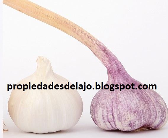 Ajo Lista de Sustancias Activas Quimicas que Contiene y la Cebolla en Argentina Paraguay Chile y Ñandu