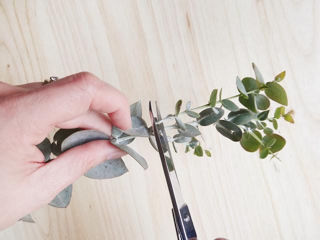 decora con eucalipto