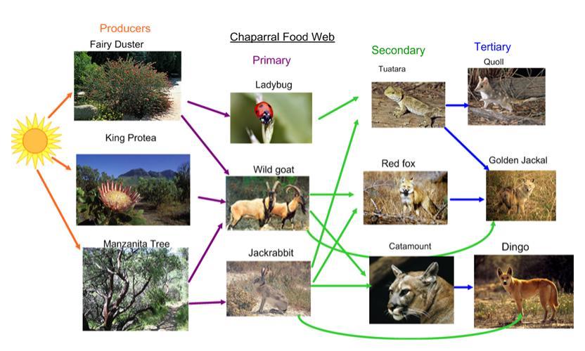freshwater biomes food chain diagram 2000 subaru forester radio wiring chaparral - ali's earth