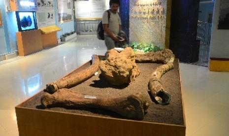 Koleksi Fosil Purbakala