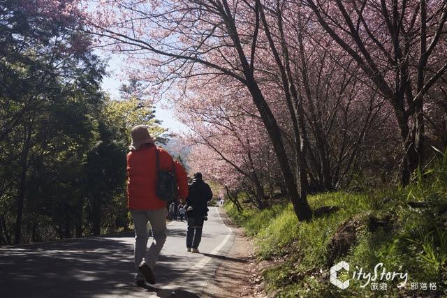 【臺灣旅遊景點推薦】單身旅行、一個人旅行的五大療癒系景點