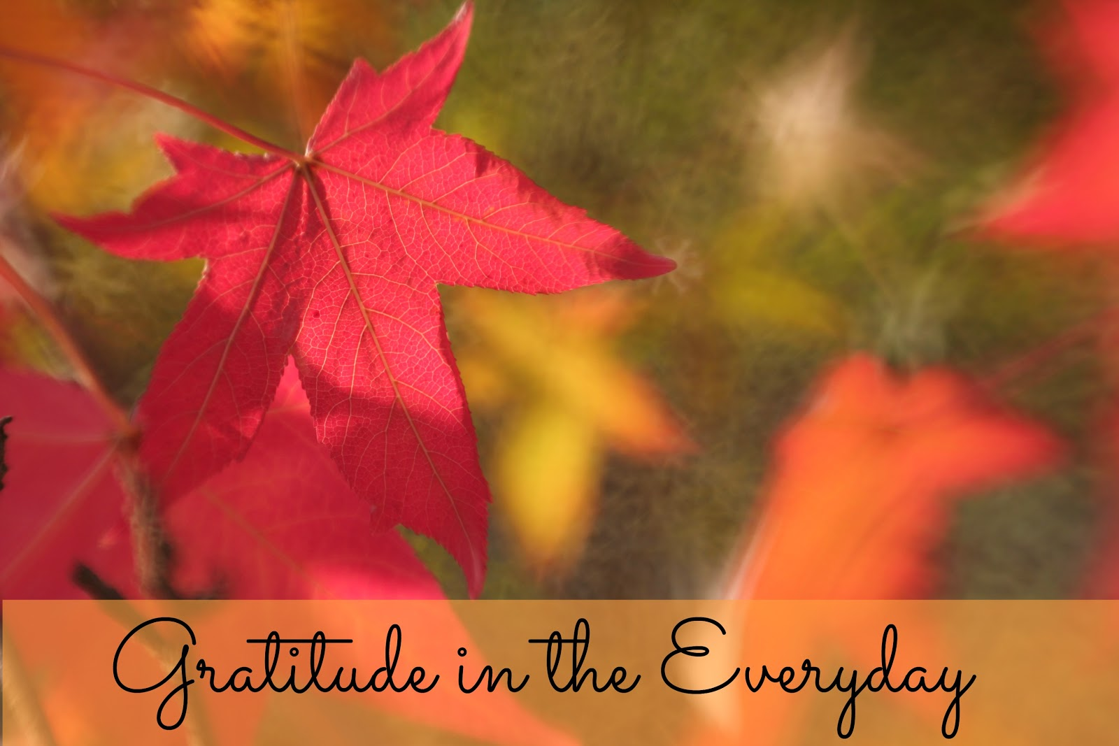 in fact i am grateful that i m alive and i m filled with gratitude for all of the wonderful amazing loving and caring individuals who are a part of my