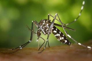 Kenali penyakit dbd dan pencegahannya saat musim hujan