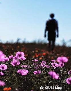 ana elvira steinbach flor floyd ambiente de leitura carlos romero