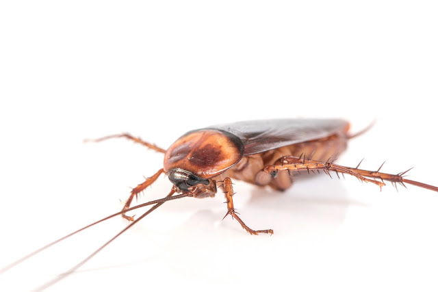 Pest Control in Wantirna