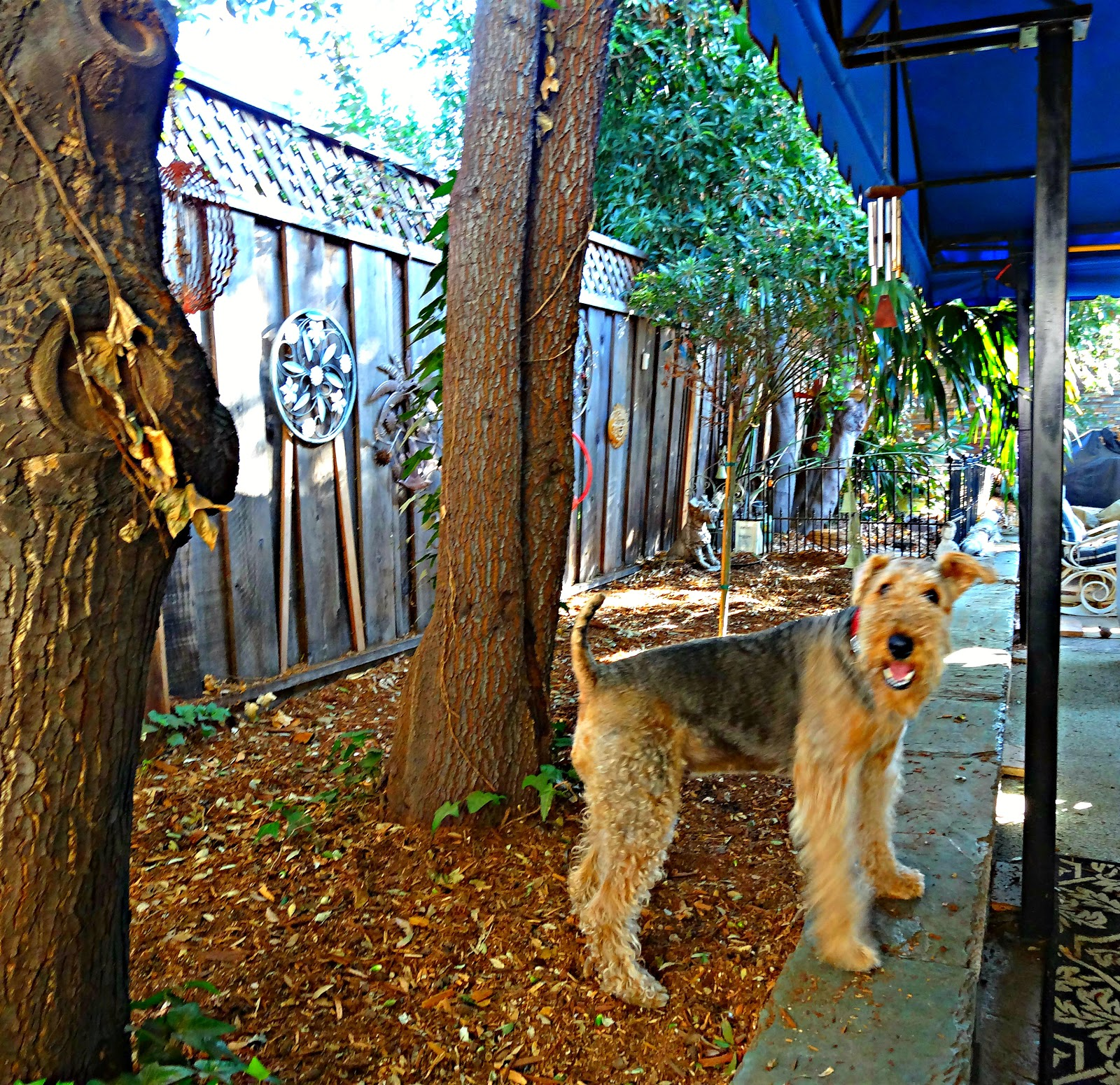 Ruby the Airedale: November 2012