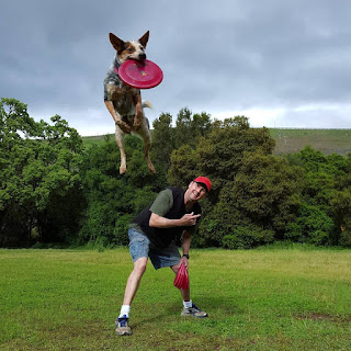 Team Vader Disc Dog Demo News
