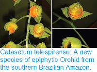 http://sciencythoughts.blogspot.co.uk/2015/08/catasetum-telespirense-new-species-of.html
