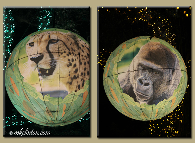 Lit balls of cheetah and gorilla