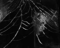 Historias de arañas y animales carnívoro