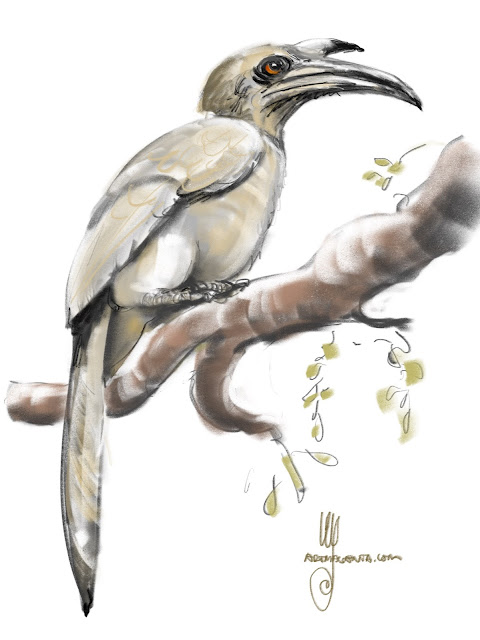 Indian Grey Hornbill bird painting by Ulf Artmagenta