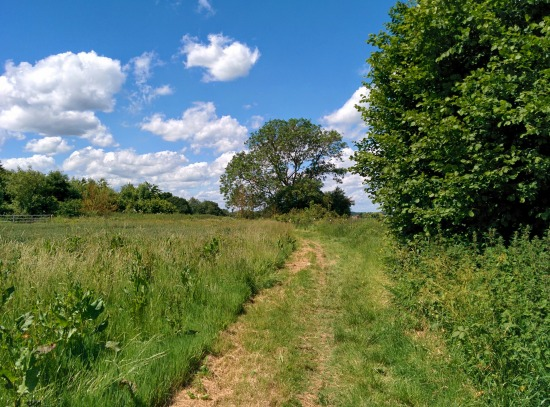 Photograph of footpath along Walk 43: Datchworth Loop