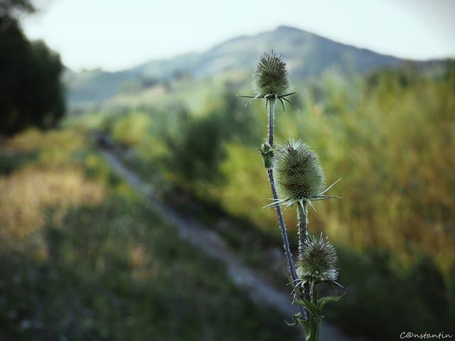 Treziţi din zori scaieţii de pe malul gârlei prezintă raportul de dimineaţă.- blog Foto-Ideea