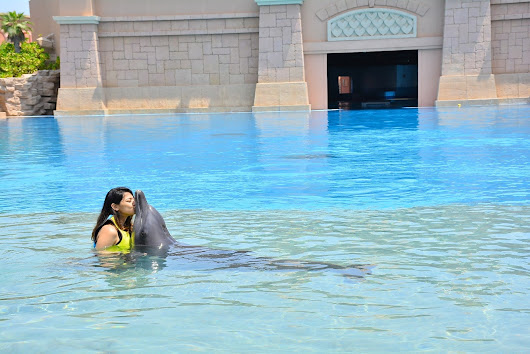 Swimming with dolphins in Dubai