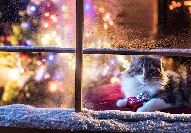 Season's Greetings! A cat at a window with snow outside and holiday lights inside