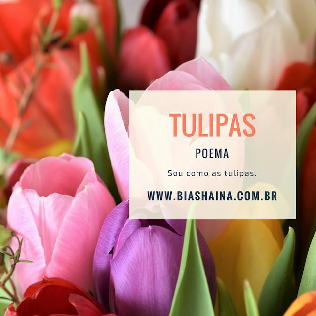 flores, tulipas, como cultivar tulipas, poema de flores, flowers