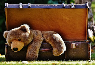 bear in luggage