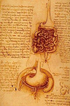 Anatomía, Da Vinci