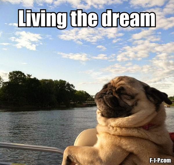 Funny Pug Dog Living The Dream Joke Picture Meme