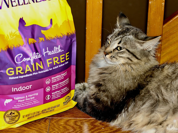 Why Fur Babies Make the Best of Friends - #HealthyMeetsHappy