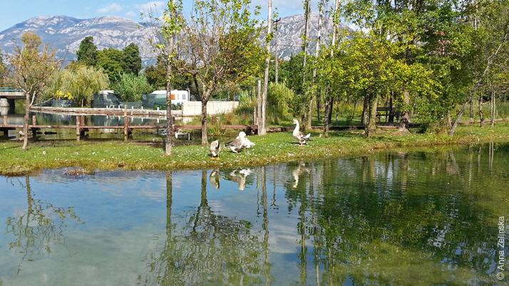 Гуси в парке ресторана Чатовича Млини