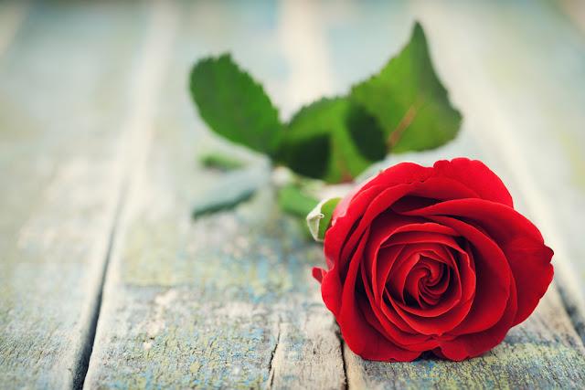 الورود الحمراء