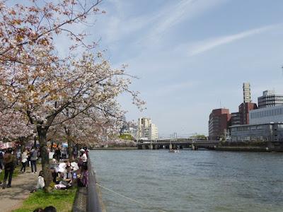 桜之宮公園の桜並木