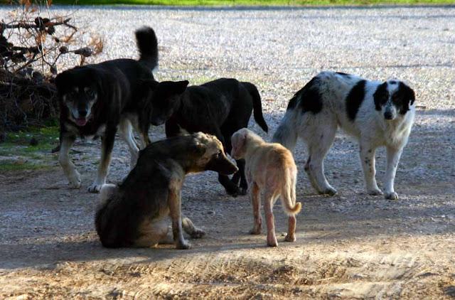 Πρέβεζα: Με πρωτοβουλία του πολιτιστικού συλλόγου Πρέβεζα: Κοινή ανακοίνωση συλλόγων Πρέβεζας για τα αδέσποτα ζώα