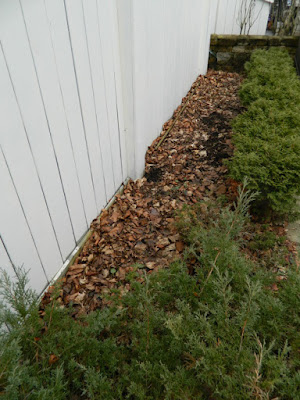 Toronto Summerhill spring garden clean up before by Paul Jung Gardening Services