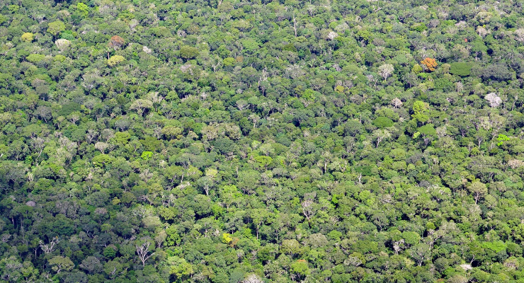 The Brazilian Amazon Rainforest Is Suffering Record High Deforestation