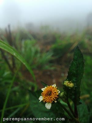 bunga hutan