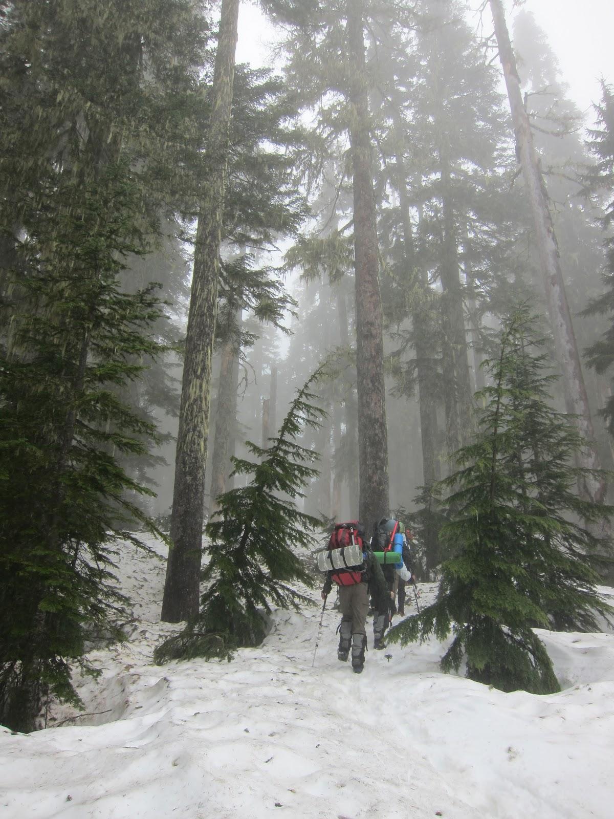 Stumbles Off the Map: Spur Trail: Shannon Ridge Trail (Mt ...