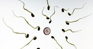 10 Makanan Penambah Penyubur Sperma Pria Zona Kesehatan
