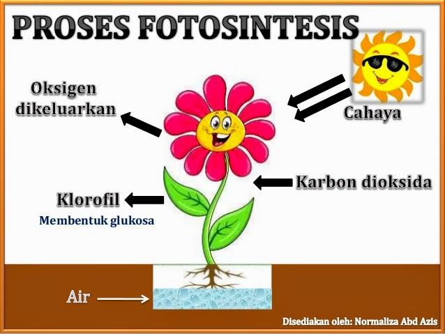 Sunpower Malaysia Planting Tree Activity