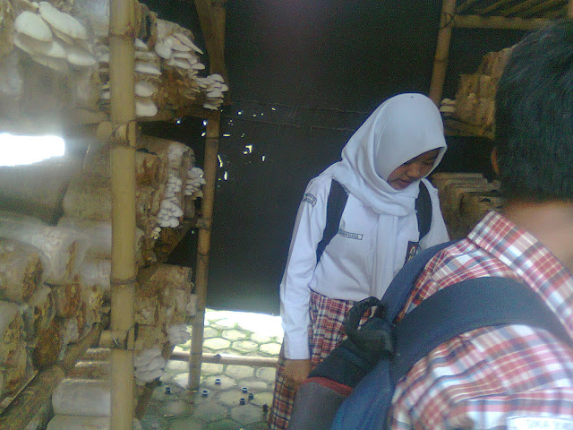 Siswa SMA Yadika Natar Budidaya Jamur Tiram