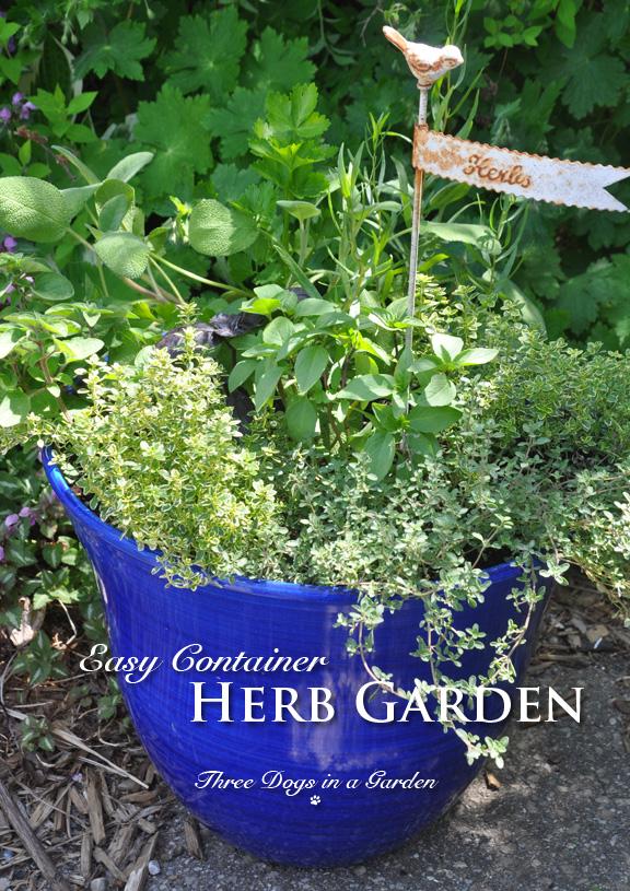 Cilantro Garden Html Amazing Home Design 2019