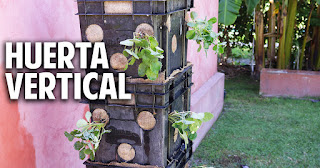 Cómo hacer una huerta vertical de frutillas con materiales reciclados en menos de una hora.