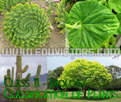 Class 11/12 - Biology - Classification of Plants (#cbsenotes)(#eduvictors)