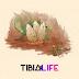 Evento: Spring into Life