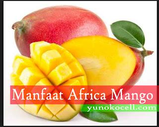 Manfaat African Mango Bagi Kesehatan Tubuh Manusia
