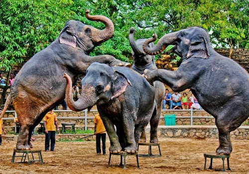 NATIONAL ZOOLOGICAL GARDEN AND GALLE FACE, COLOMBO.  10 Places Not to Miss in Srilanka