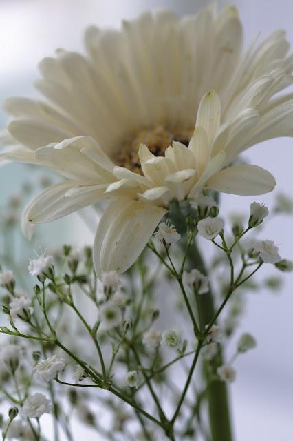 #kukkailottelua, kukka, valokuvaus