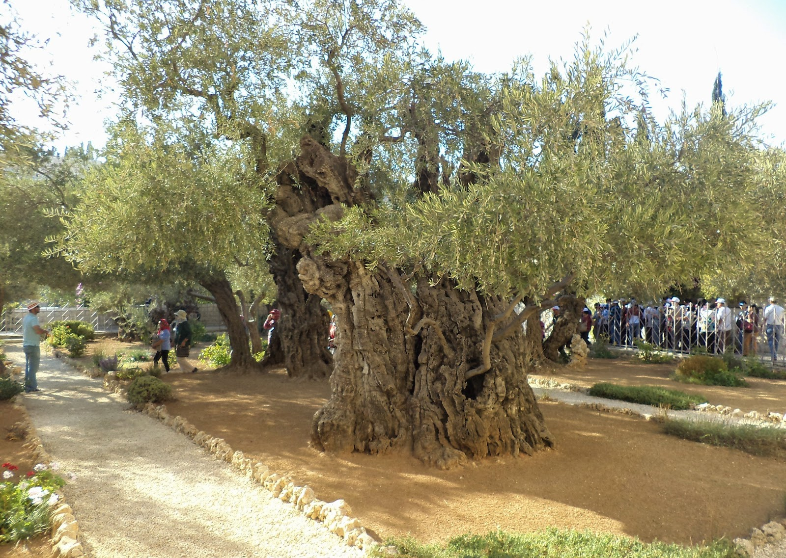 Walking Distance Et Cetera Trees